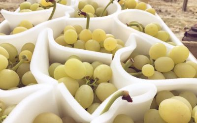 Novello brings to the table the authentic taste of grapes. Start of the 2018/19 season