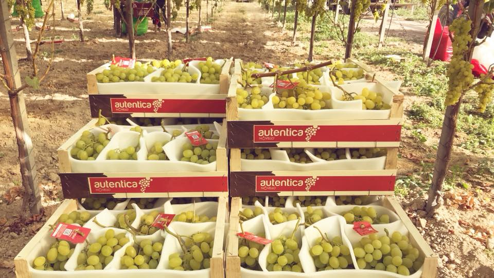 With our brand Autentica we re-value the original taste and aroma of grapes